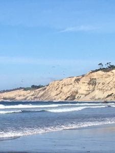 Probate Guardianship Calming White Cliffs Of San Diego